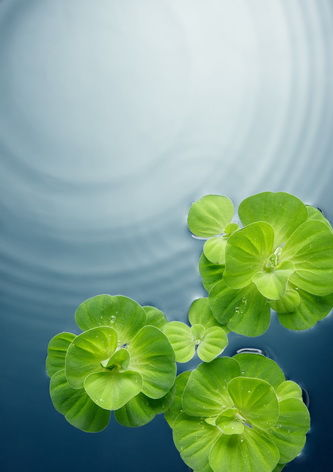 plants on water